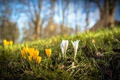 春天…上升了叶子,自然本底 免版税库存图片