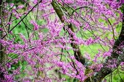 春天…上升了叶子,自然本底 库存照片