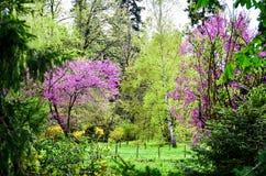 春天…上升了叶子,自然本底 免版税库存照片