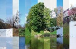 春天、夏天、秋天和冬天在一张照片 库存照片