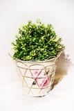 春天一个白合金罐的温室植物在白色架子和 库存照片