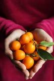 柑橘属 库存图片