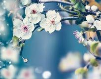 春天与关闭的自然背景在蓝色背景,框架的樱花 免版税库存照片