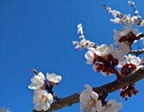 春天与分支桃子开花的复活节框架 免版税库存照片