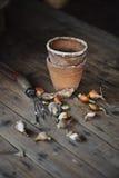 春天与园艺工具和陶瓷罐的装饰灯泡在木桌上 免版税库存照片