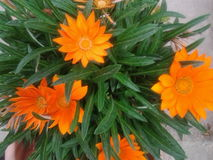 春天与持久的花的庭院装饰 库存图片