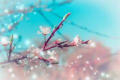 春天与树开花的自然背景在公园或庭院分支 库存图片