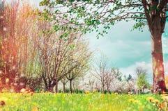 春天与树开花的自然背景,室外 免版税库存图片