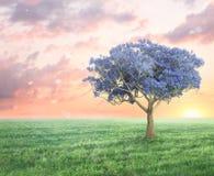 春天与紫罗兰色树的幻想风景 免版税库存图片