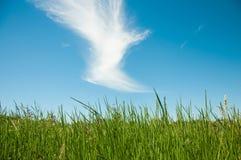 春天与草和蓝天的自然背景在后面.summer时间 云彩形状的鸟 免版税图库摄影
