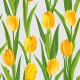 春天与郁金香的花背景 免版税库存图片