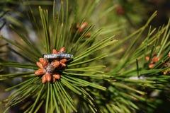 春天与金刚石的提案圆环,在开花的杉木的定婚戒指 免版税图库摄影
