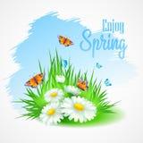 春天与雏菊的贺卡 向量 免版税库存照片