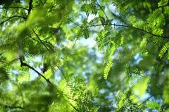 春天与绿色叶子和蓝天的自然背景 免版税库存照片