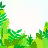 春天与绿色叶子的卡片背景 免版税图库摄影