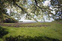 春天丹麦海岸线 免版税库存图片