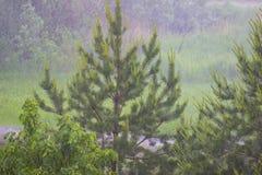 春天也许在森林里下雨 免版税库存图片