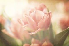 春天五颜六色的郁金香 免版税库存照片