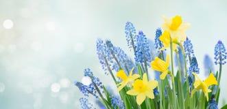春天会开蓝色钟形花的草和黄水仙 库存照片