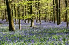 春天会开蓝色钟形花的草木头 免版税库存图片