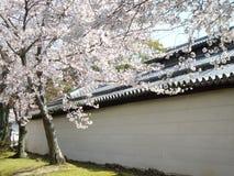 春天佐仓在京都,日本 库存照片