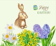 春天兔子和花 库存照片