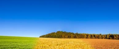 春天全景拼贴画,夏天和秋天调遣 库存照片