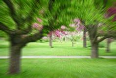春天公园的图象有行动迷离作用的 免版税库存照片