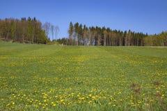 春天农村风景在捷克 免版税库存照片