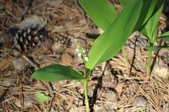 春天到来带来不仅一种好心情,而且第一朵花 免版税库存图片