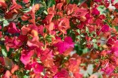春天到达了,带来与她的所有颜色! 免版税库存图片