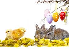 春天动物 免版税库存图片