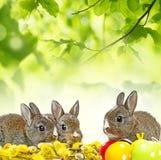春天动物 库存照片
