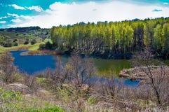 春天午间太阳照亮在湖的银行的木头 免版税库存照片