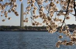 春天华盛顿 图库摄影