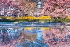 春天反射华盛顿特区 免版税库存图片
