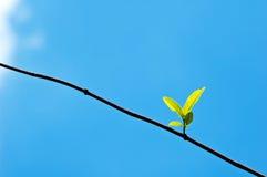 春天发芽在蓝天(新的生活概念)的叶子 免版税库存图片
