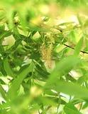 春天叶子在阳光下 免版税库存图片