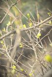 春天叶子 图库摄影