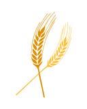 春天向量麦子 库存照片