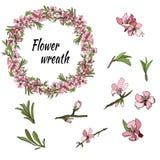 春天和假日设计与苹果和杏仁玫瑰色花  库存例证