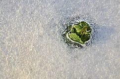 春天和冰溶解 免版税库存照片
