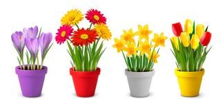 春天和夏天五颜六色的花的汇集我 免版税库存照片