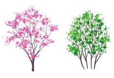 春天和夏天树 免版税库存照片