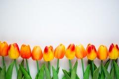 春天和夏天概念-接近郁金香开花与拷贝 库存照片