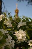 春天和开花的苹果树基督教会 库存照片