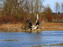 春天和水水 免版税库存图片