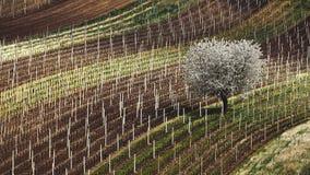 春天和第一棵开花的树白色开花的苹果树起点在背景 南摩拉维亚捷克 免版税图库摄影