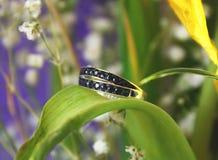春天和蓝宝石晶体静物画 库存照片