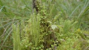 春天唤醒花和植被在森林森林植物群落 森林的本质,绿草 股票录像